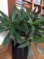 Beltéri árnyék szereto alacsony növény Vetőmag